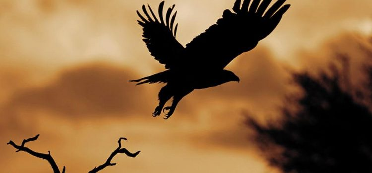 Reader photo: Eagle silhouette